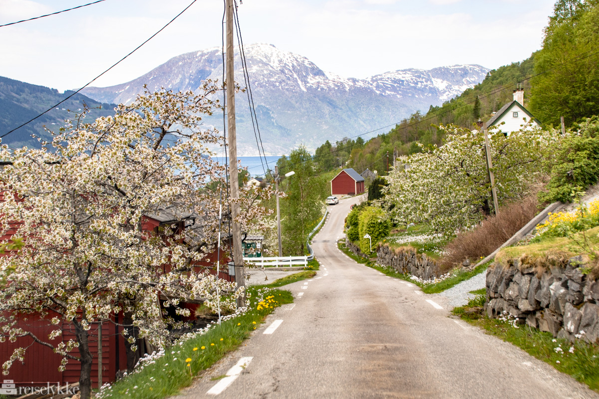 Of course we will be on Norway vacation this year!