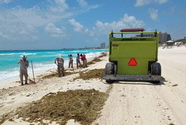 Mexican caribbean: the kelp back in June with the reopening