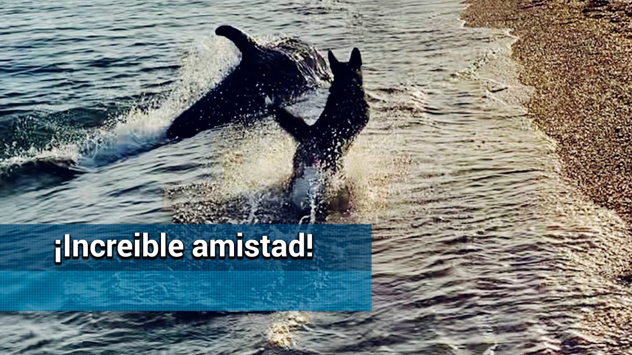 Video – goes viral the game between dolphins and a dog along the beach