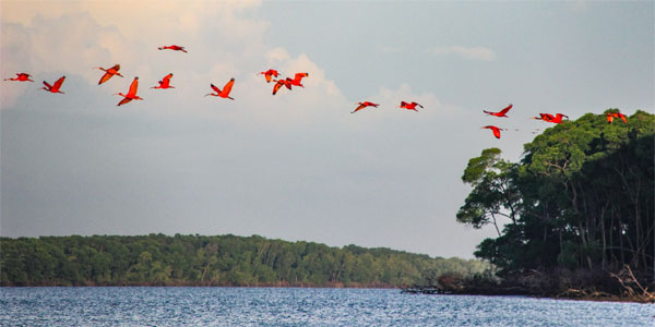 Resumption of tourism in Parnaíba: flight of guarás