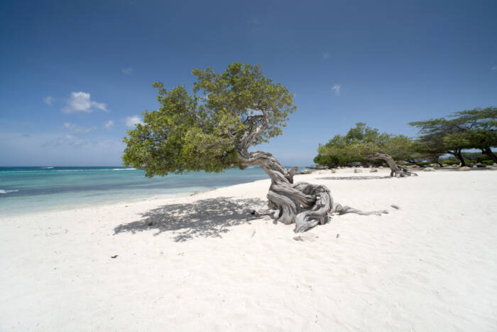 The Caribbean is full of dream beaches. One of the most beautiful is Eagle Beach.